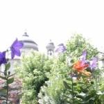 Hotel Fleur De Lis Belvedere