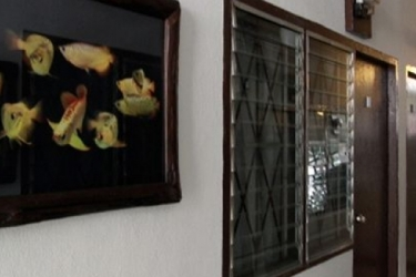Zz House Chiang Mai: Camera Junior Suite CHIANG MAI