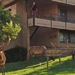 Hotel Thunderbird Lodge