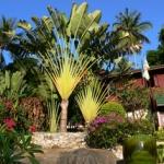 Hotel Sandalwood Luxury Villas
