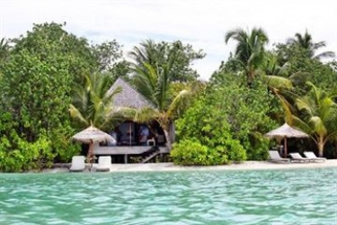 Hotel Gangehi Island Resort: Pinienwald MALDIVEN