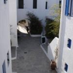 Hotel Andromeda Residence