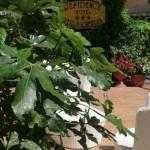 Hotel Residence Villa Ofelia