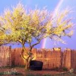 ATACAMADVENTURE WELLNESS & ECOLODGE 3 Etoiles