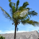Hotel Diani Bay Resort
