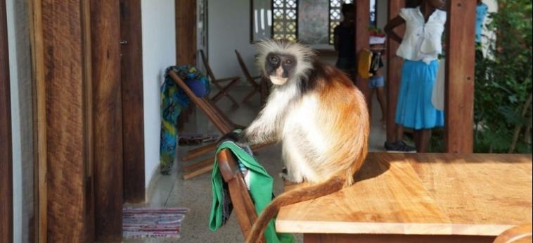 Arthotel Zanzibar: Pine Forest ZANZIBAR